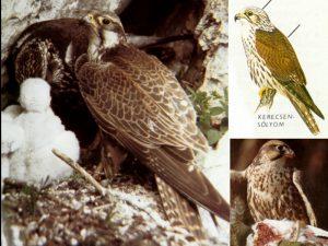 Nemzeti parkok hete – Bemutatják Dél-Tiszántúl védett pusztai élővilágát