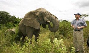 Én az elefántokkal vagyok!
