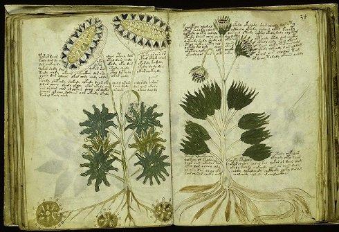 A gyakori botanikai jellegű ábrák többsége nem hasonlít az ismert növényekre