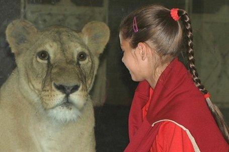 Állatkerti belépő jár a szelektíven gyűjtött italos kartondobozokért