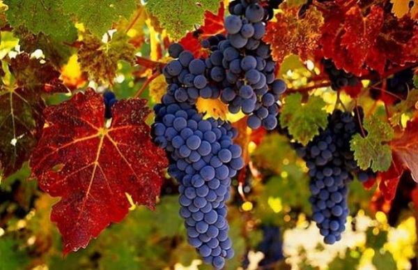 bor-fogyaszto-nemzet