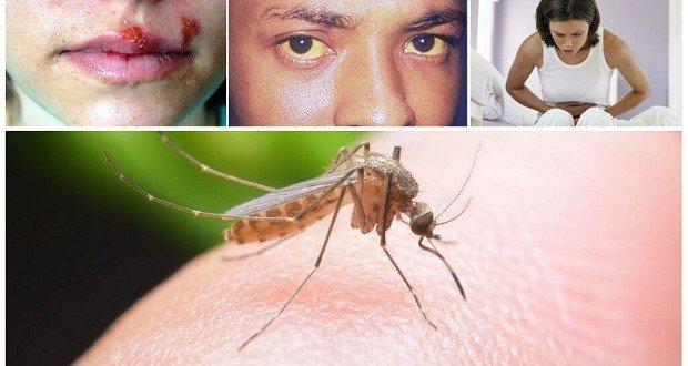 Erdélyi magyar kutatók a malária gyógyításáért
