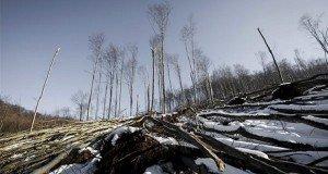 S.O.S. Bajban az erdő! – Még korlátozzák az erdőlátogatást a Börzsönyben