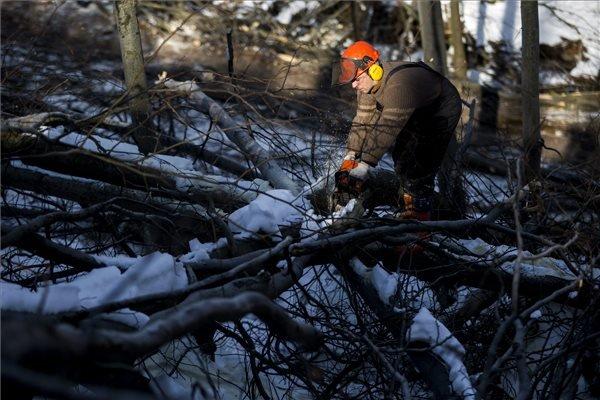 Az Ipoly Erdő Zrt. szakembere láncfűrésszel kidőlt fákat darabol a Börzsönyben 2015. február 20-án, ahol folyamatosan dolgoznak a decemberi ónos eső okozta károk elhárításán és az utak felszabadításán, de továbbra is korlátozzák az erdőlátogatást; ugyanakkor vannak már járható utak. MTI Fotó: Mohai Balázs