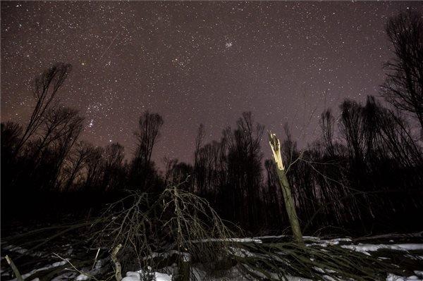 Sérült erdőterület a Börzsönyben 2015. február 20-án, ahol az Ipoly Erdő Zrt. szakemberei folyamatosan dolgoznak a decemberi ónos eső okozta károk elhárításán és az utak felszabadításán, de továbbra is korlátozzák az erdőlátogatást; ugyanakkor vannak már járható utak. MTI Fotó: Mohai Balázs