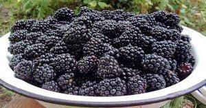 Egyszerű a termesztésük: őseink gyümölcsei