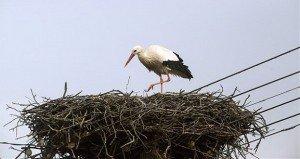 Visszatért az első gólya Somogysámsonra