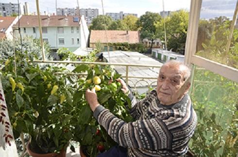 Bejött neki az erkélyre álmodott zöldségeskert