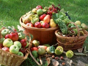 Szerzetesrendek a hazai gyümölcsfajták megőrzéséért