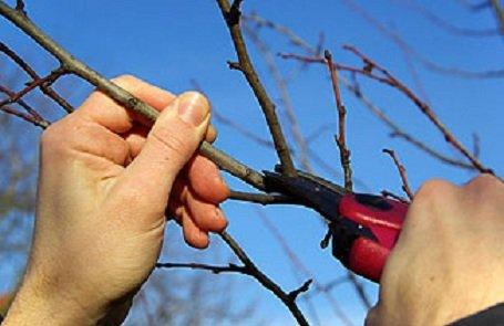 Ébredeznek gyümölcsfáink – Bálint Gazda tanácsa