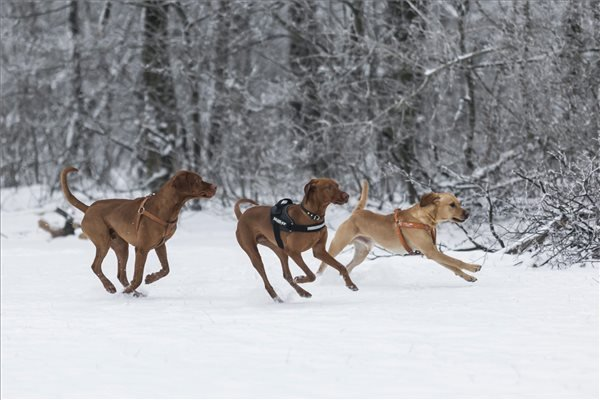 havazas_budapesten 5