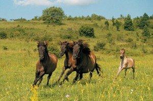 Hucul lovakkal indul túra Aggtelekről Lengyelországba