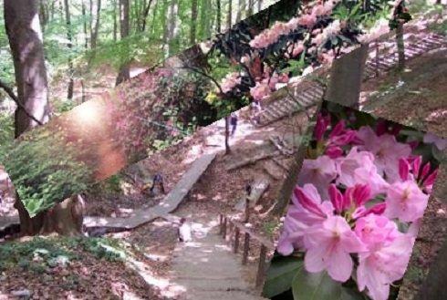 Ha Vas megyében jársz, akkor Jeli Arborétum