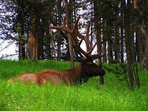 Sokkoló látvány lesz – Le kell tarolni a Keszthelyi hegység erdeinek egy részét