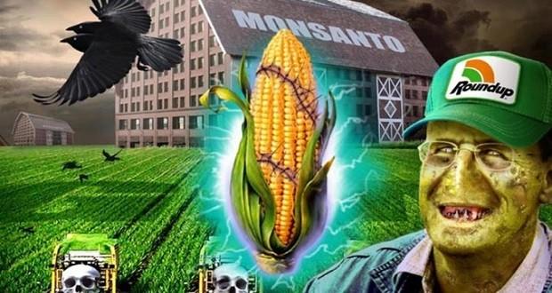 Korai halál és súlyos daganatok a Monsanto kukorica hatására