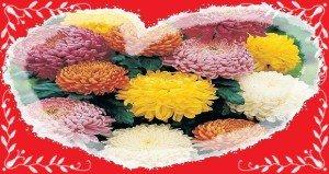 Ősszel pompázik az időskori szerelem virága