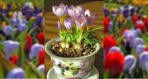 Üde tavasz a szobában