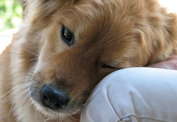 kutya 2 (2)