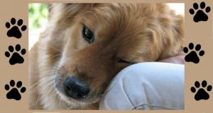 A kutya valóban az ember legjobb barátja