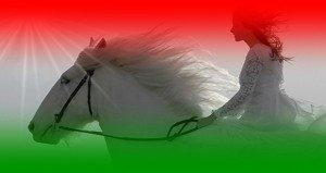 Szebenyi Judit: Fehér ló reményünk