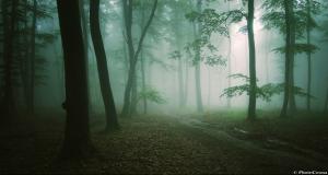 Erdélyi mágikus erdő- Andrei és Sergiu Cosma galériája