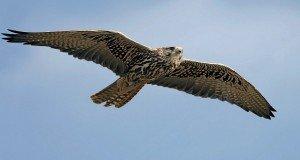 Szárnyalj madár sebesen!- Szebenyi Judit verse