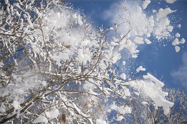 Hó hullik egy fáról a Mecsekben, Pécs közelében 2014. december 29-én. MTI Fotó: Sóki Tamás