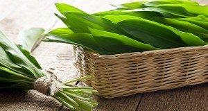 A tavaszi erdő ajándéka: medvehagyma- receptek