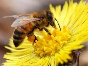 Amit a mézről érdemes tudni – Mézes krémes
