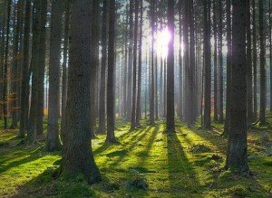 Mit rejt a marosszéki kerek erdő?