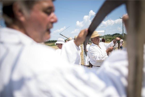 Kaszát éleznek férfiak a Mohácsi Polgárok Olvasókörének hagyományos aratónapján a város határában.