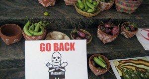 A Monsanto emberiségre legkárosabb 12 terméke