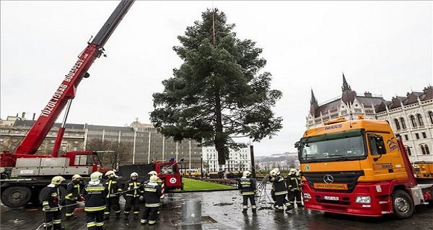 Tűzoltók felállítják az ország leendő karácsonyfáját a Kossuth téren 2014. december 8-án.