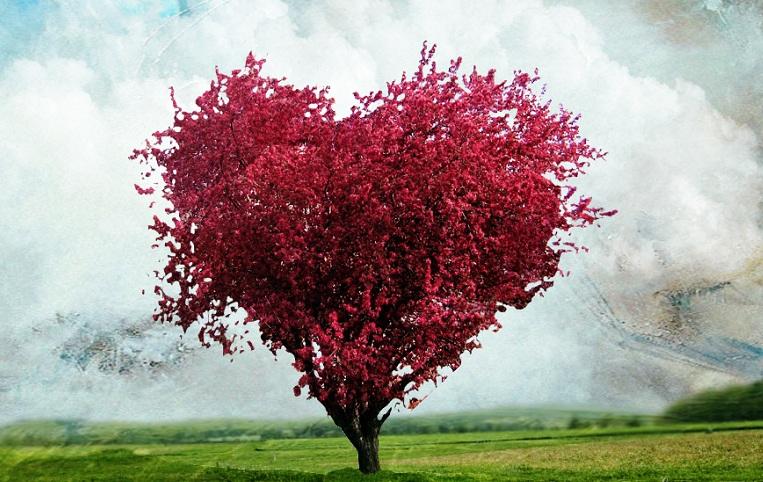 A Kárpát – medence őshonos fái képekkel
