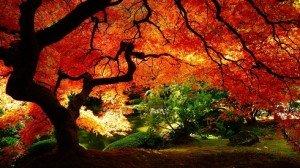 Szép őszi vasárnap reggelre virradtunk – Programajánlatok