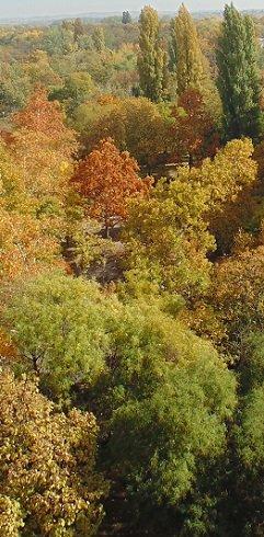A parkok erdők csodaszép színekben pompáznak.