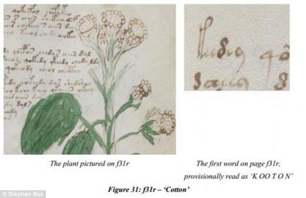 """Az ültetvény beazonosítása után a """"cotton"""" szót a """"cooton""""-ból sikerült először dekódolni."""