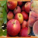Szóló szőlő, mosolygó alma…