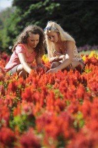 Magyar nemesítésű virág a világ dísznövénye 2013-ban