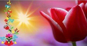 A tulipán több, mint ősi női jelkép