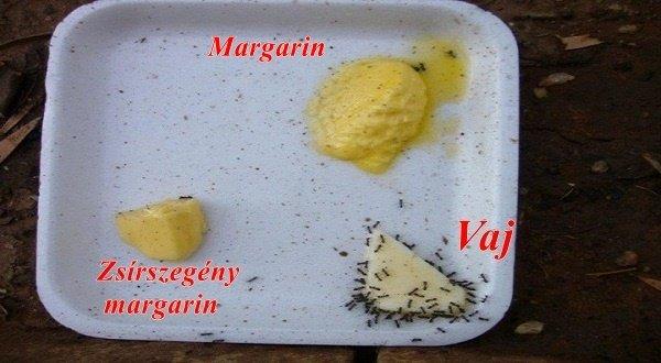 dr. Litsek Ákos megdöbbentő előadása a margarinok fogyasztásáról