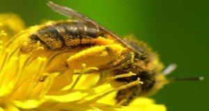 A méhek tudják