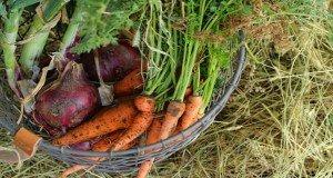 Zöldségek téli tárolása