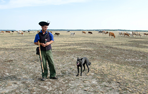 Pásztor a Hortobágyon Fotó: Bajomi Bálint