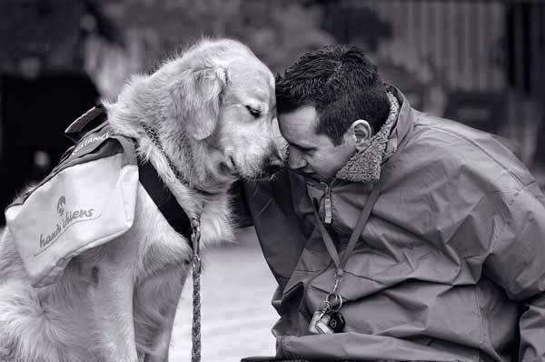 csak-egy-kutya