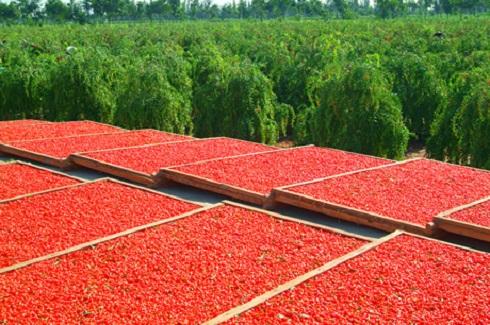 Értékesítésre váró betakarított termés