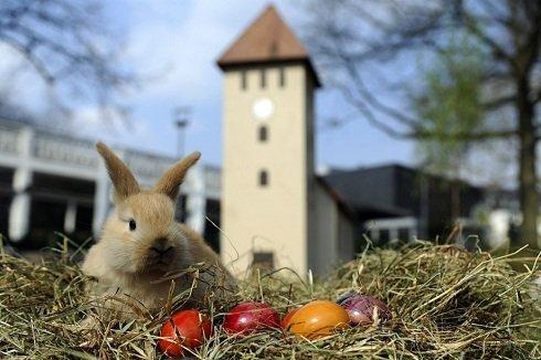 Köln, Németország - Húsvéti nyúl és a hímestojások