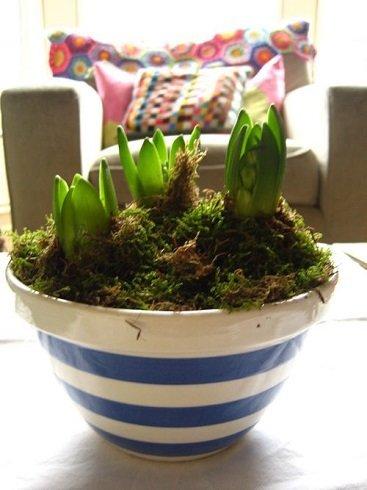 """A 2 - 3 centiméteres hajtást növesztett növény élni akar. Itt az ideje, hogy a """"tavasz napfényt"""" a nappaliban élvezze."""