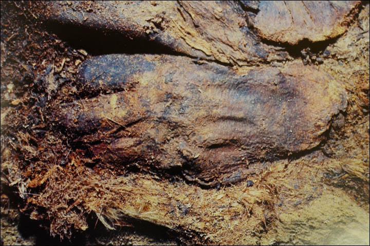 A múmiák egyes testrészeit réz borította, ugyanakkor gondosan szőrmébe burkolták a testet Fotó: The Seiberian Times