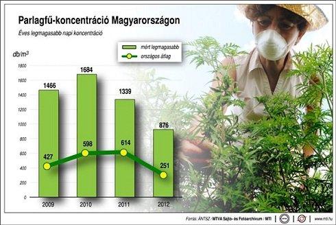 A köztudatban elterjedt, gyomnövénynek kikiáltott parlagfű -  Éves legmagasabb napi koncentráció (MTI)
